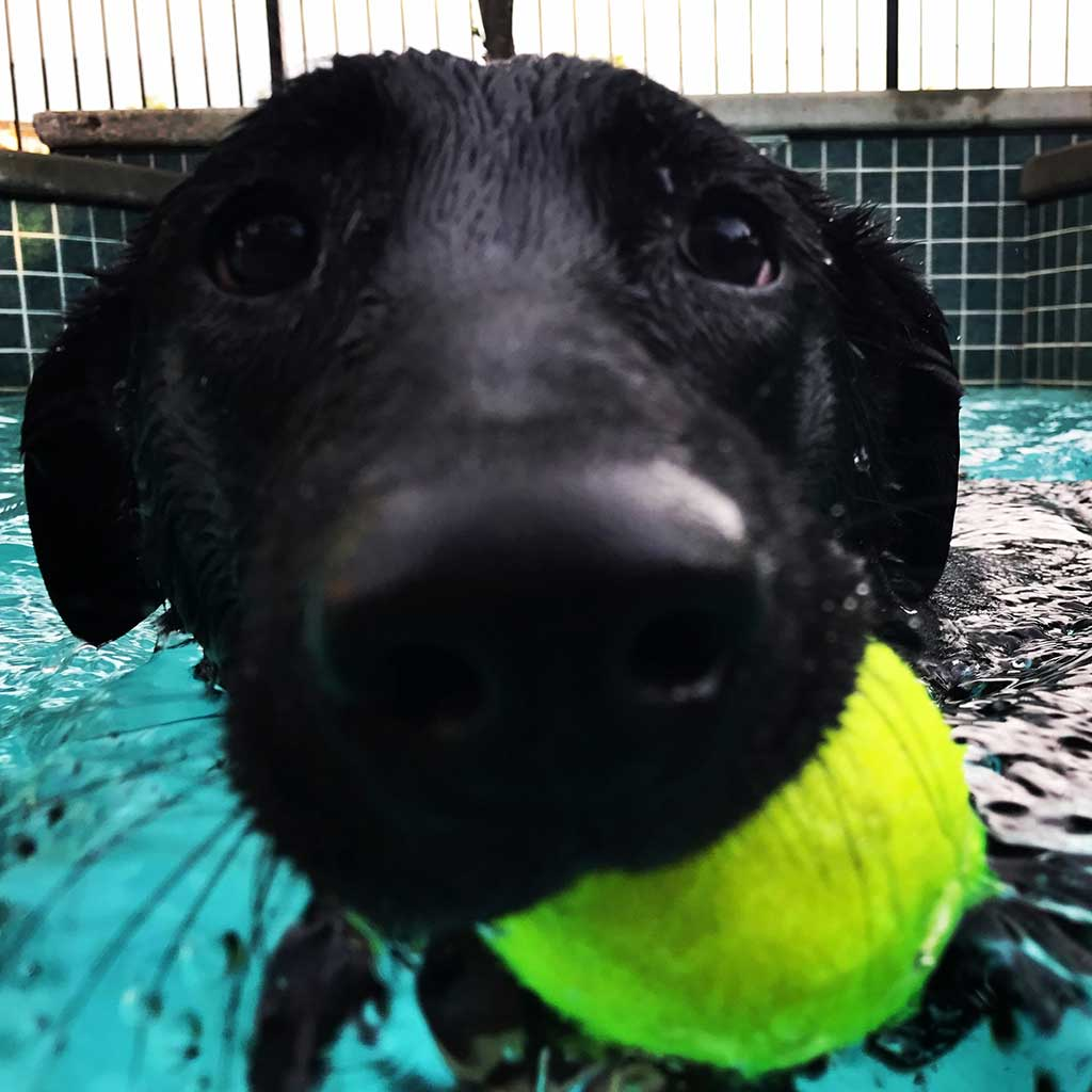 Black Labs love balls and water